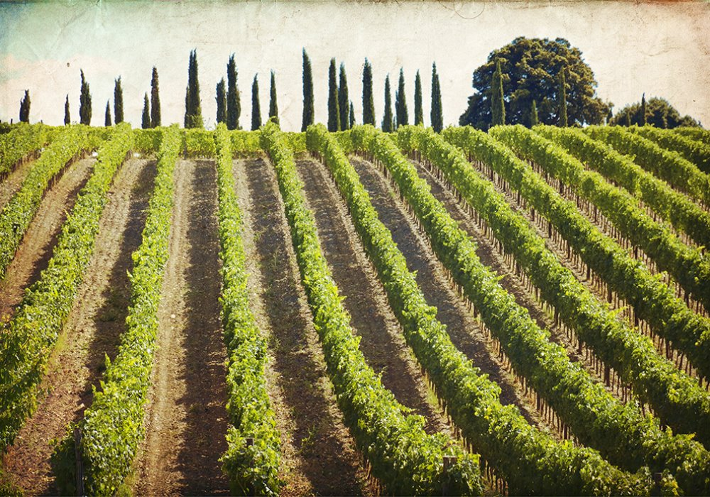 Toscana e vini di prestigio Viticoltori di eccezione in Toscana